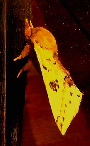 EyeEm Nature Lover Moth Tiger Moth Yellow Insect Photography Insect Insects  Insect_perfection Insects Collection Insect Photo Insect Macro  Springtime EyeEm Gallery Eyem Gallery Mothernature Oklahoma Nature Mother Nature My Favorite Photo Magic