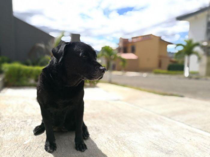 DogsLife Dog