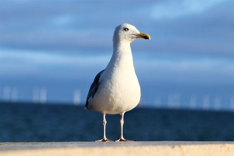 Seagull perching on a sea against sky