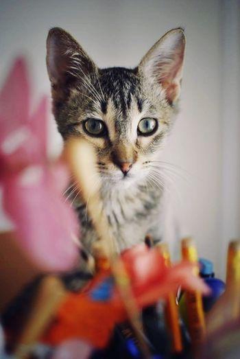 Close-up portrait of kitten