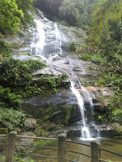 Tijuca Forest Day Flowing Flowing Water Forest Green Green Color Jungle Nature No People Power In Nature River Tijuca's Forest Tranquil Scene Urban Forest Valley Waterfall