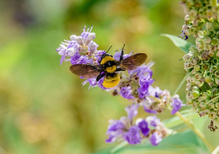 Close-up of bee on purple flower