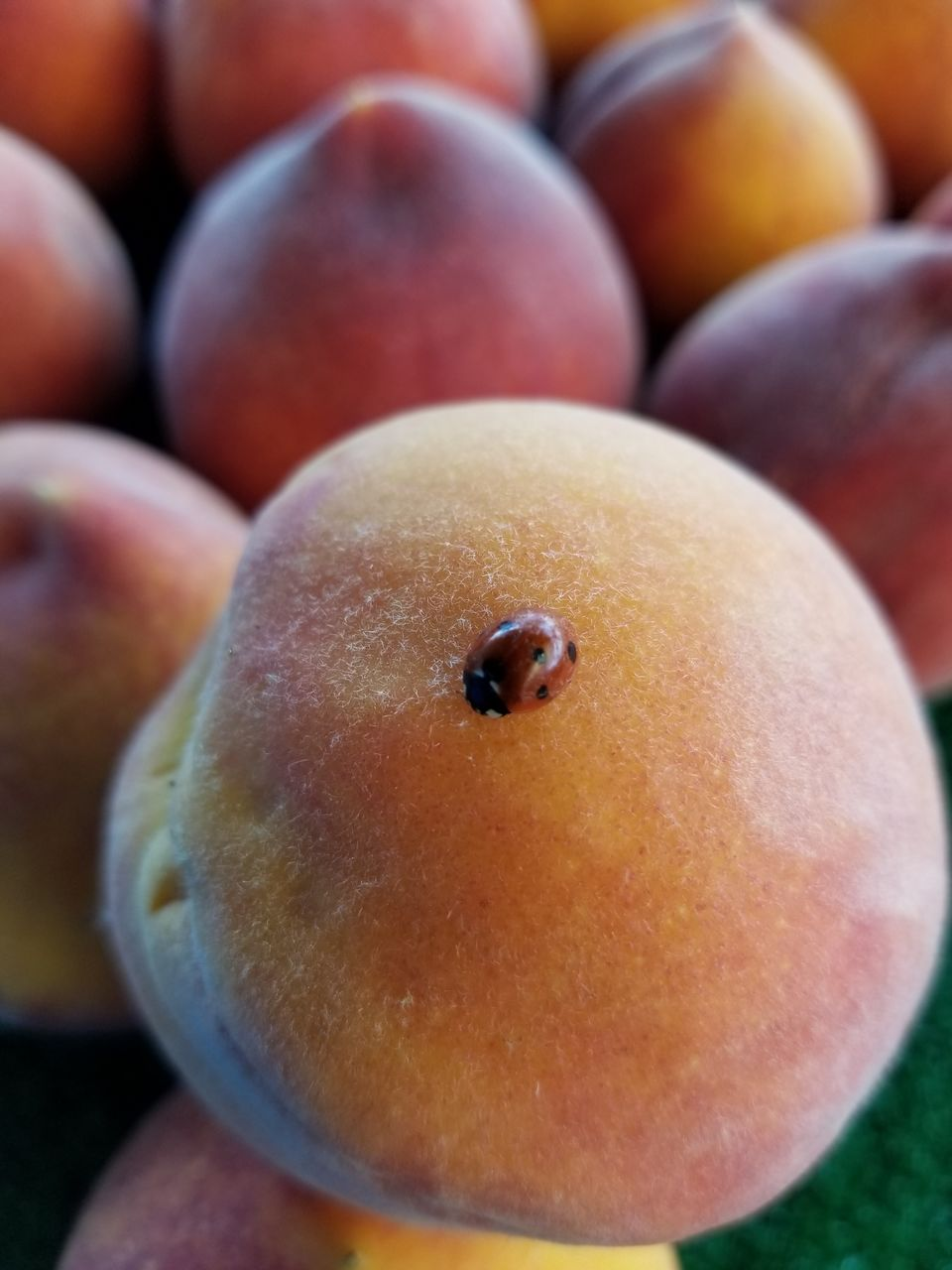 food and drink, food, fruit, healthy eating, close-up, freshness, focus on foreground, no people, day, indoors, ready-to-eat