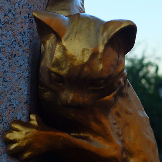 Animal Body Part Cat Close-up Day Kitty Nature No People Russia Sculpture Sky Tyumen'