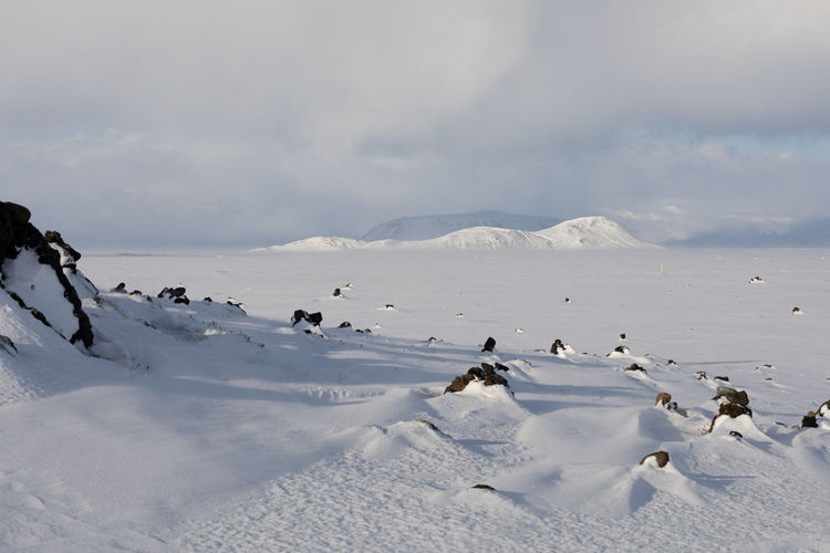 Flock of birds on snow covered land against sky