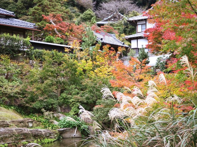 Architecture Tree Nature Growth Building Exterior Plant Outdoors No People Day Engakuji Kamakura Short Trip Deep Autumn Beauty In Nature