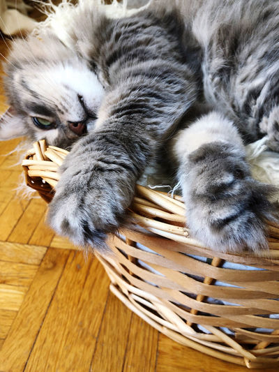High angle view of cat relaxing in basket