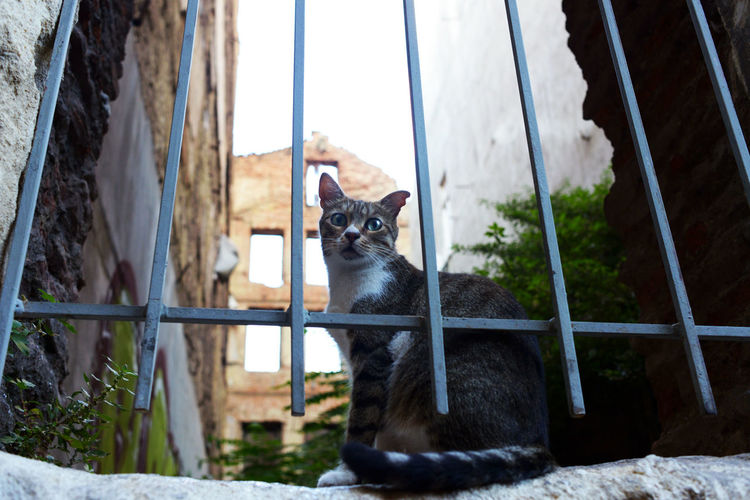 Street Cat of Istanbul Istanbul Ruins Tamar Mirianashvili Animals Cat Cat Lovers Day Dslrphotography Istanbul Cats Nature Nikon 50mm F/1.8 No People Old Buildings Pets Street Cat Stories From The City