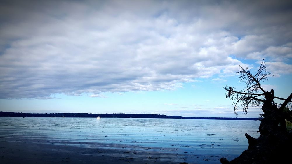 Beach Tolmie State Park Washington State Taking Photos Check This Out Water Tree Log Relaxing Beautiful Sky Clouds Blue Hello World Hi! Adventure Enjoying Life EyeEm Summer Nature Photography EyeEm Best Shots EyeEm Gallery Clouds And Sky Boats Showcase July Hidden Gems