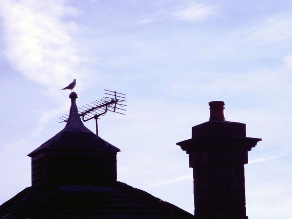 Black headed gull sat on abandoned pub roof. Abandoned Animal Themes Animals In The Wild Architecture Bird Photography Blackheaded Gull Blue Blue Sky Chimney Cloud - Sky Clouds And Sky Day EyeEm Best Shots Man Made Object No People Non-urban Scene One Animal Outdoor Photography Outdoors Roof Rooftop Seagull Silhouette Tranquility Winter