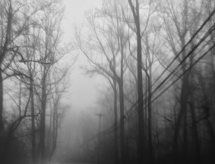 Nature Tree Bare Tree Fog No People Tranquility Beauty In Nature Outdoors Sky Hazy  Day Branch Low Angle View Tranquil Scene