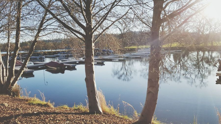 Showcase March Outside Photography Sun Light Reflection Calm Water Water_collection Taking Photos Beauty Dockside Samsung Galaxy S6 Enjoying Life Rows Of Trees