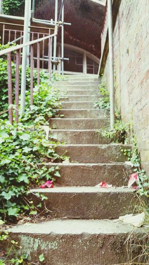 Stair way to anywhere? Stairways Stairs To Nowhere Stairs_up Stairs_steps Stokesbay Stokes Gosport Leading To Nowhere Abandoned