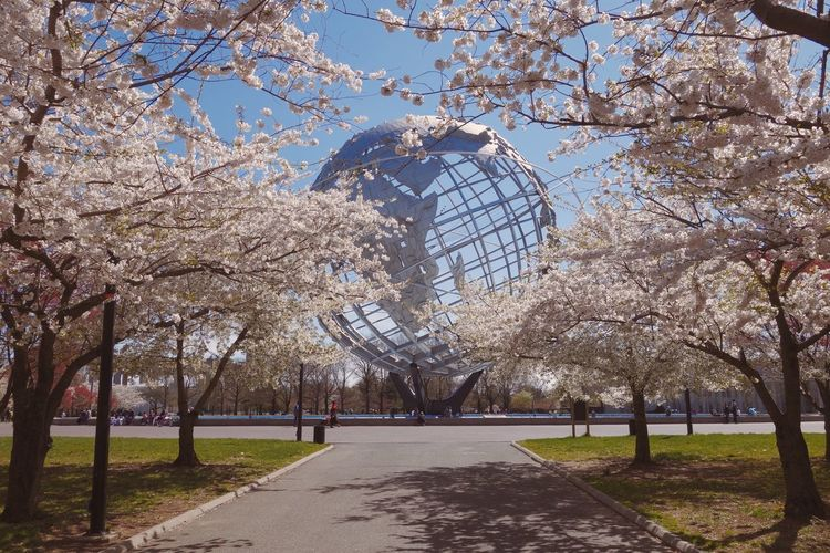 Spring Spring Into Spring Cherry Blossoms Unisphere