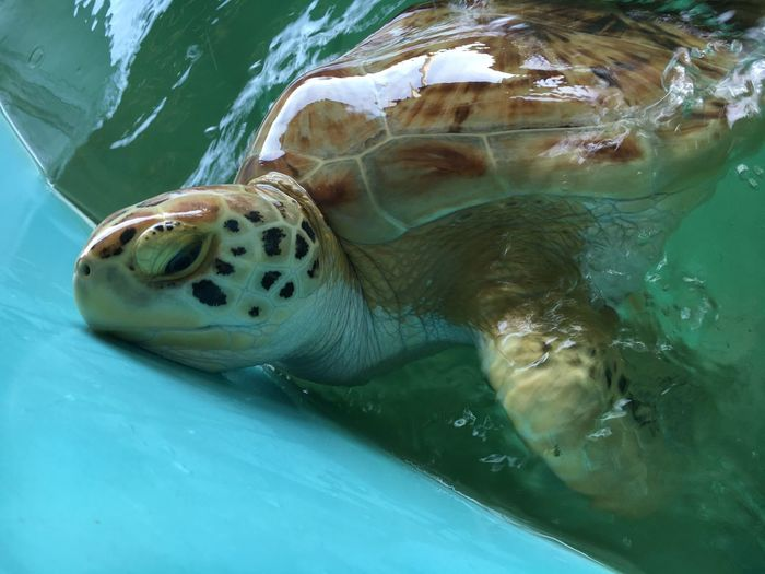 Close-Up Of Turtle In Water Container