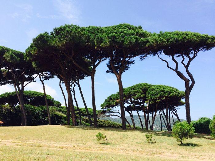 Protecting Where We Play Italy Toscana Freedom