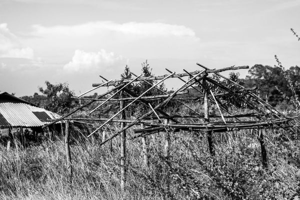 Abandoned Bare Tree Black And White Photography Branch Day Environmental Conservation Field Grass No People Outdoors Remote Shed Skeleton Wood