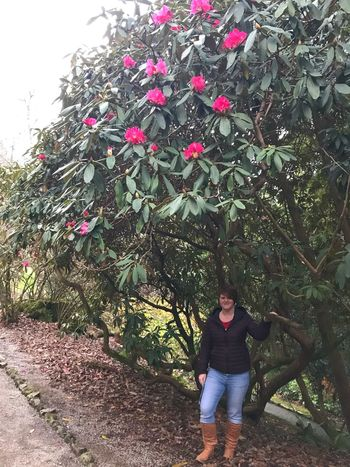 Feel so small stood under an extremely large rhododendron. Never seen one so big before Soman Stood Under A Large Rhodedendron With Pink Flowers Rhodedendron EyeEm Gallery Nature Pink Flowers One Person Front View Full Length Looking At Camera Real People Portrait Young Women Growth Lifestyles Outdoors Plant Beautiful Woman Flower Young Adult
