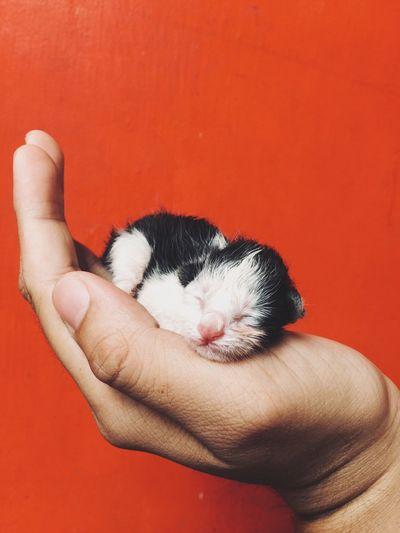 newborn kitten One Animal Pets Domestic Mammal Human Hand Domestic Animals Human Body Part Pet Owner Whisker Feline Cat Domestic Cat Hand