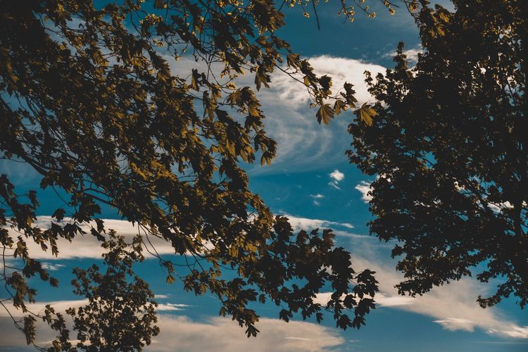 Tree Sky Plant Beauty In Nature Cloud - Sky Nature Low Angle View Tranquility Growth Branch No People Day Outdoors Tranquil Scene Scenics - Nature Leaf Idyllic Blue Plant Part Sunlight Directly Below Tree Canopy  EyeEm Best Shots EyeEm Nature Lover EyeEm Selects My Best Photo