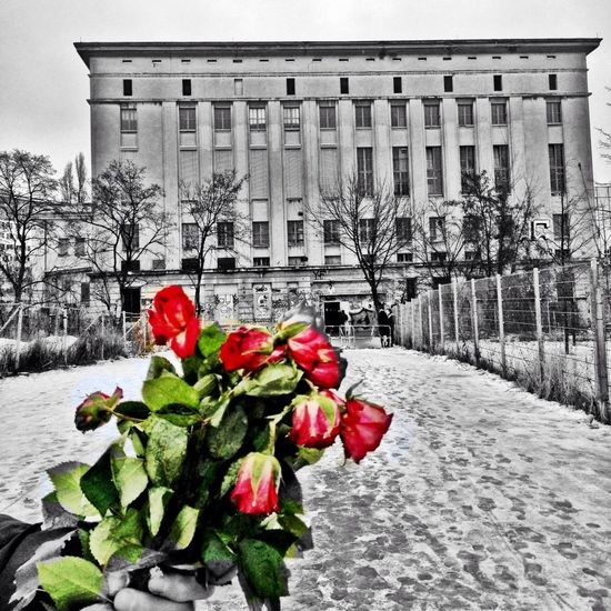 Party Berlin Berghain Roses