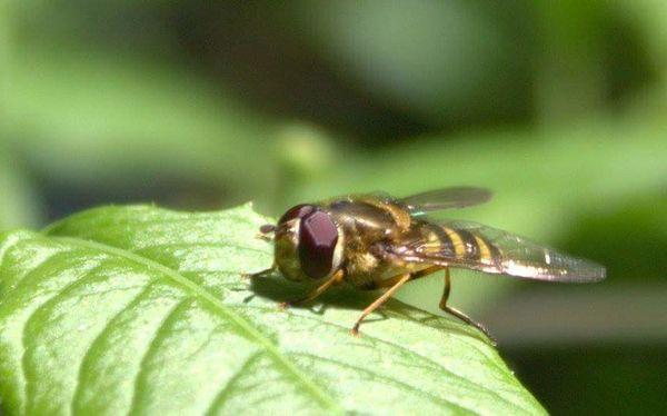 First Eyeem Photo Bee Nature Braintree Essex Close-up EyeEmNewHere