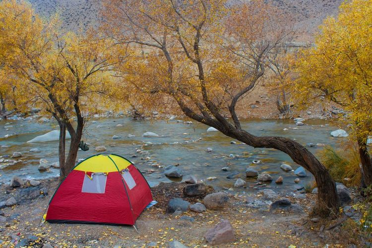 Tree Nature Beauty In Nature Yellow Day Water Outdoors Travelphotography Cold Traveling River Tehran 700D Tree Beauty In Nature Landscape Jajrood 700D Camp Camping