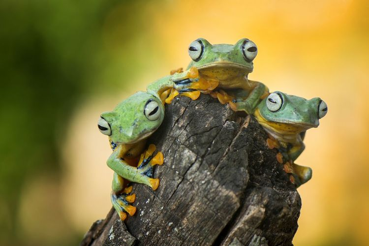 Close-up of frogs on wood