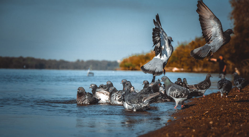 Bird Water Flying Sky Close-up Group Of Animals Spread Wings Flight