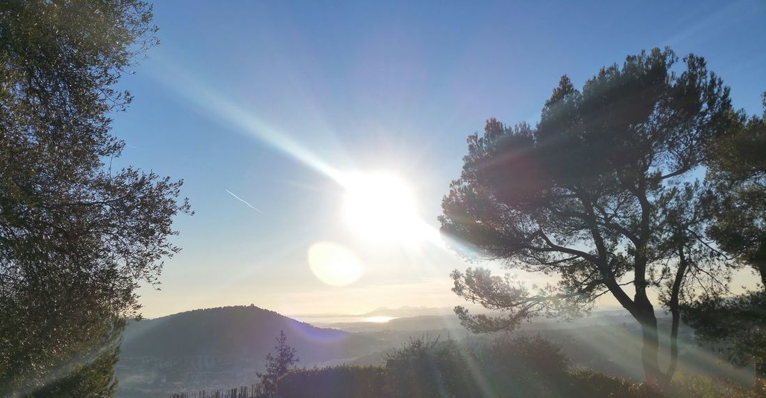 Sunbeam Beauty In Nature No People Outdoors Tree Sunlight Sky Sun Mountain Scenics Nature No Edit / No Filter French Riviera Côte D'Azur Mediterranean Sea Valley Olive Tree Blue Sky
