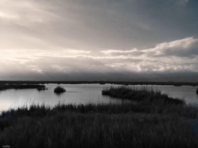 Finding New Frontiers Blackwater National Wildlife Refuge Blackandwhite