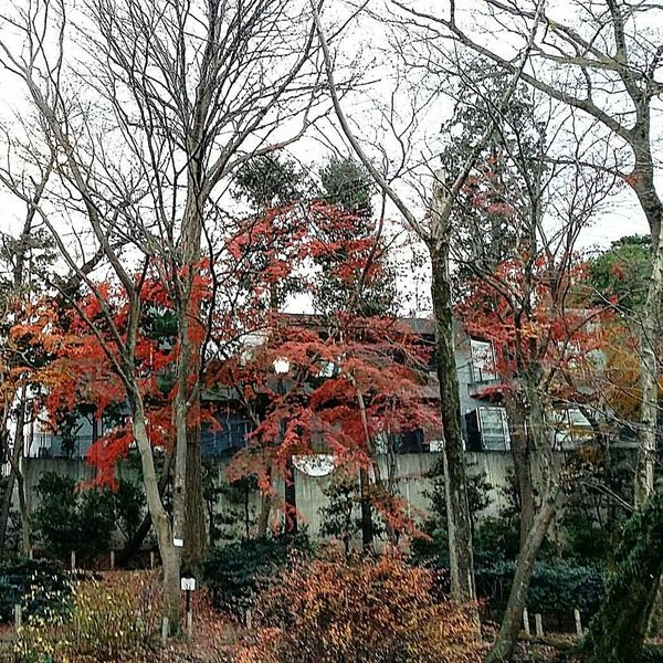 Autumn Colours Autumn Trees Inokashira Park House By The Lake Musashino Tokyo Tokyo,Japan TokyoDec2016 Tokyowinter 2016