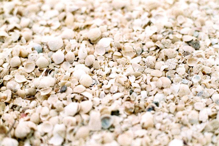 Seashells on the beach in Holbox, Yucatan Peninsula, Mexico Sunny Abundance Backgrounds Beach Beach Sea Close-up Day Holbox Large Group Of Objects Nature Playa Seaside Shells Shells Beach Yucatan Peninsula