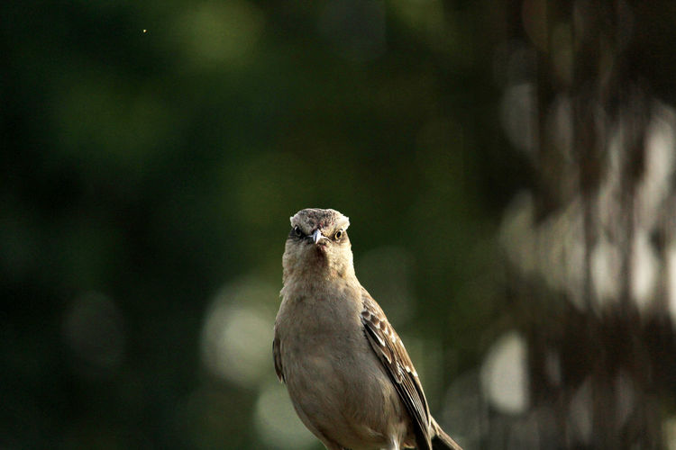 The eyes of a bird Wildlife & Nature Bird Eyes One Bird On Focus Face Animal Themes Nature Photography Background Photography Green