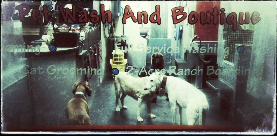 keep your dog clean Getting Clean Cleandog Waschsalon