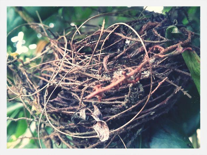 Bird nest EyeEm
