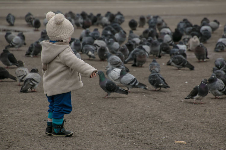 Side View Of Child Looking At Pigeons On Field