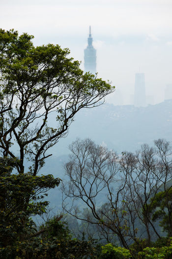 View of nature and Taipei 101 in distance from the top of Maokong Mountain. ASIA Asian  City Cityscape Skyline Taipei 101 Taipei,Taiwan Taipei101 Taiwan Tourist Attraction  View Adventure Beauty In Nature Explore Mao Kong Maokong Maokonggondola Mountain Nature Outdoors Taipei Tourist Destination Tree Viewpoint Visit