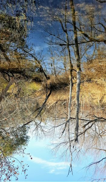 If Reflections Were Reality Beauty In Nature Branch Nature No People Outdoors Reflection Reflections Relection On Water Scenics Sky Tranquil Scene Tranquility Tree Tree Trunk Water