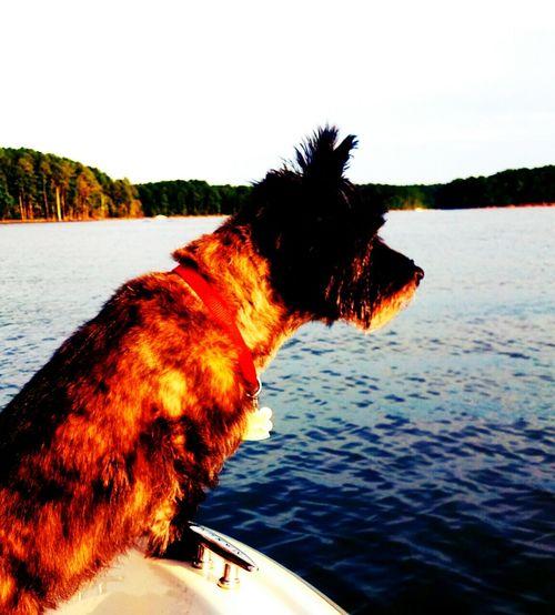 South Lake Lakelife JordanLake Cairnterrier Boating Boat Ride Boat Trip Boatlife Dogslife