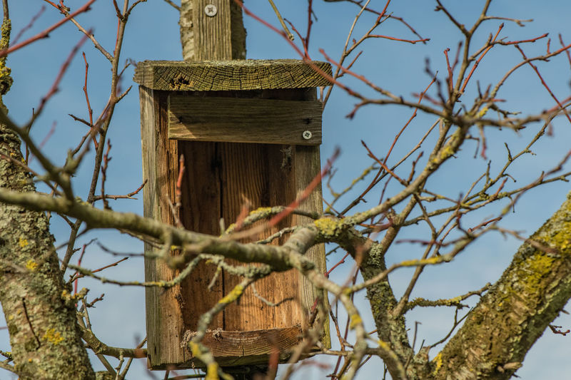 Tree Birdhouse Wood - Material Branch Plant Nature Low Angle View No People Animals In The Wild Vertebrate Focus On Foreground Bare Tree Bird Outdoors Sunlight Wooden Post Germany