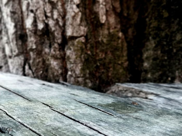 Surface level of wooden planks on tree trunk