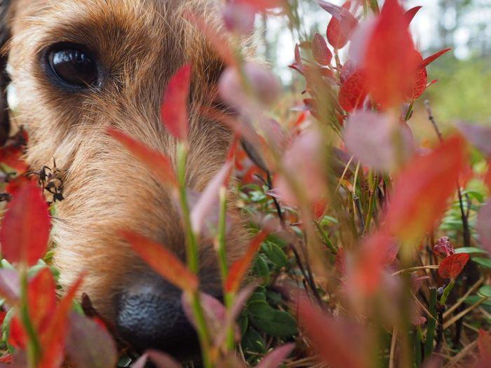 Best friend Dog