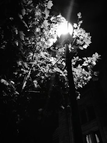 Streetlamp Light Leaves Shadows Enlightment Blackandwhite Contrast Black White Solitude Alone Darkness And Light Cities At Night OO Mission Follow_me Peaceful Lets Get Lost Trees Take A Walk Fairy Tale Monochrome Photography Welcome To Black