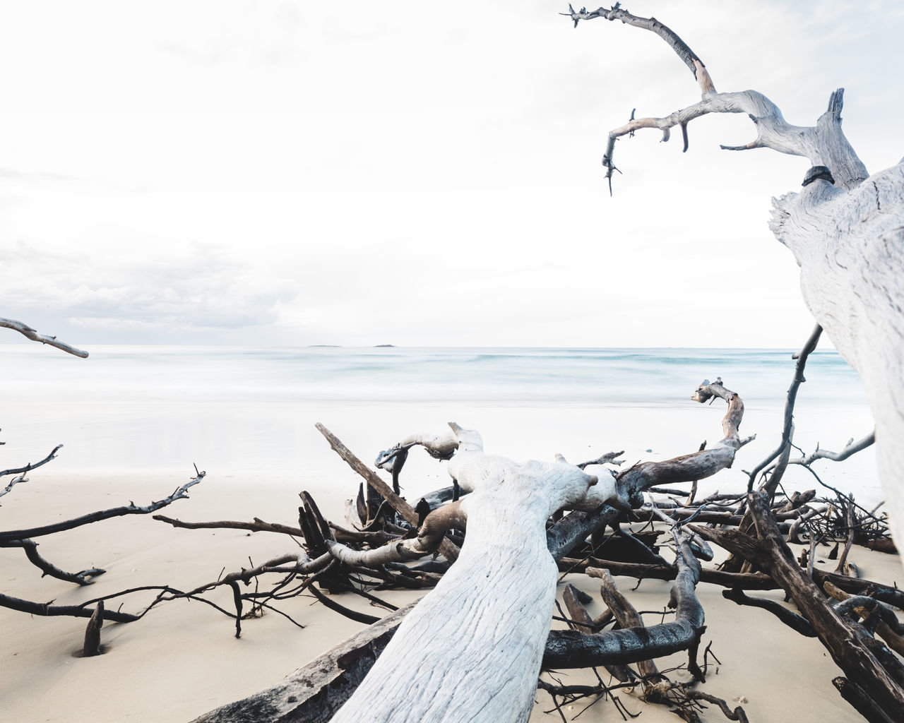 nature, sea, horizon over water, day, outdoors, sky, beauty in nature, scenics, tranquility, dead plant, no people, tranquil scene, dead tree, water, wood - material, branch, beach, bare tree, tree, animal themes, close-up