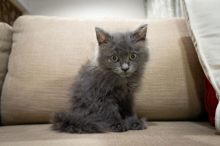 Portrait of kitten relaxing on sofa