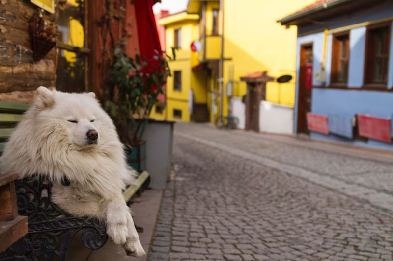 Sleepy dog napping on the bench Nap Bench Light And Shadow Light Cute Natural Light Natural Street Sleepy Dog Sleepy Eskişehir One Animal Animal Themes Dog Built Structure Pets Outdoors Street Building Exterior No People Day Architecture Close-up