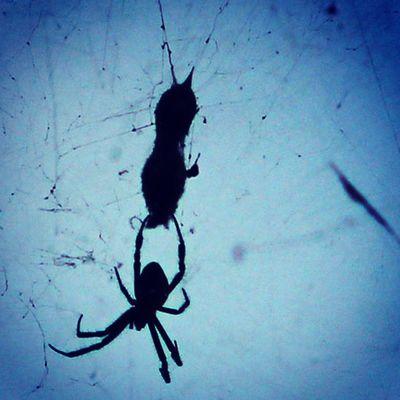 Shadow of new generation. Spider Spiderworld Spiders Ig_spider shadow