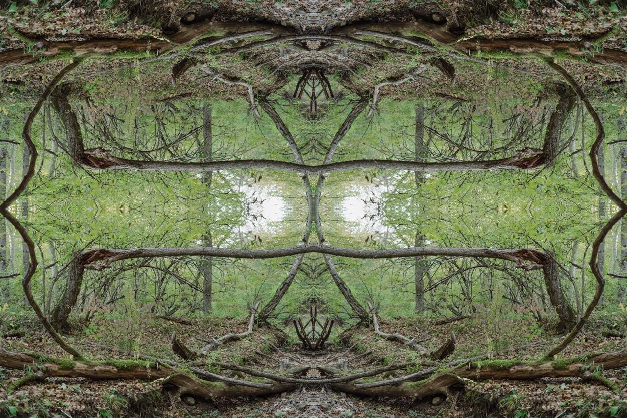 DIGITAL COMPOSITE IMAGE OF TREES