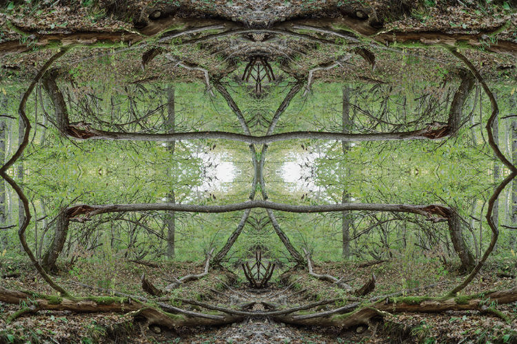 Digital composite image of trees on field